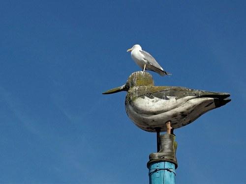 Bird Tower