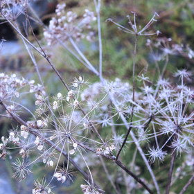 Photography: Weeds and Grasses