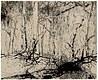 Forest Rumor