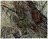 Lichen Nest