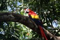 MacawaCosta Rica