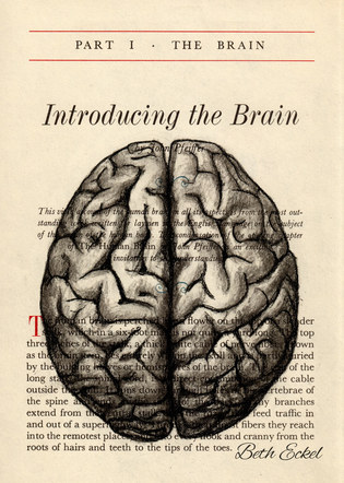 Introducing the Brain