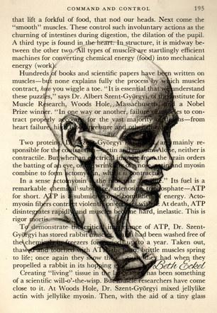 Musculoskeletal Face