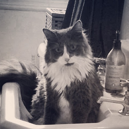 Archibald in the sink